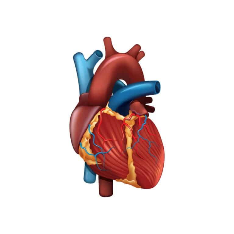Eventos cardíacos